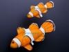 Ψάρι Κλόουν (Νέμο)Μαξιλάρι